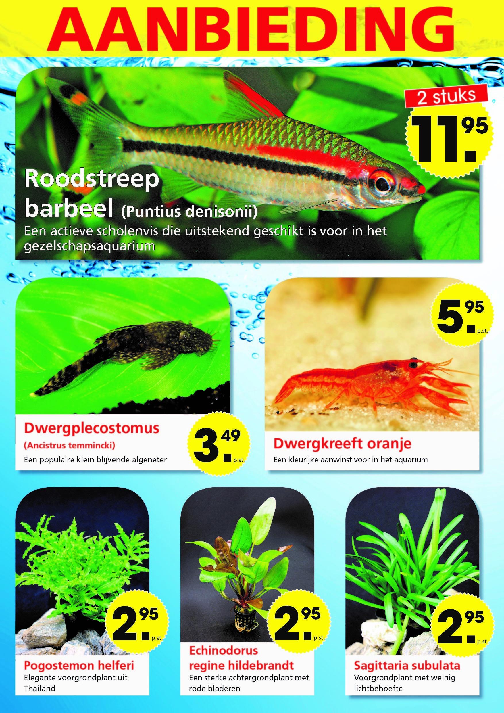 temperatuur aquarium tropische vissen